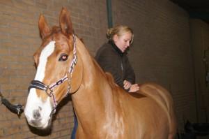 chiropractie-paard-foto1