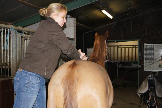 chiropractie-paard-foto2