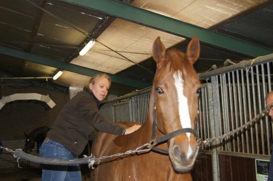chiropractie-paard-foto3